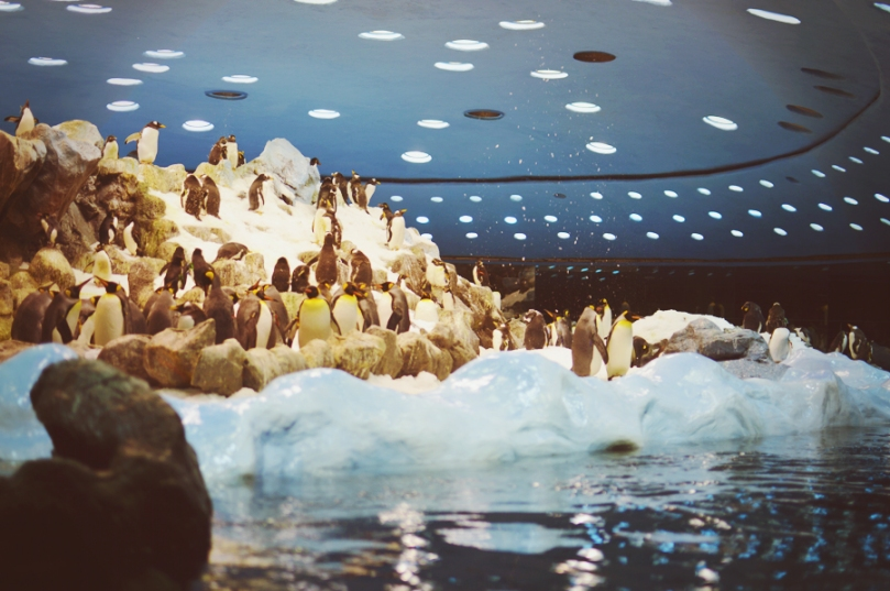 Pingunaarium