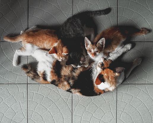 a-kitten
