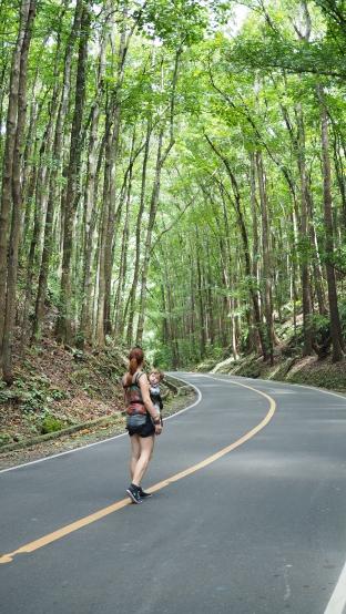 Meeste istutatud mets ehk Man Made Forest - mahagonipuud, mis parandavad maastikku ja floorat, faunat